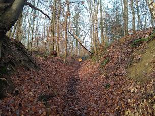 JCPMF Villers-le-Bouillet - 10+ trail